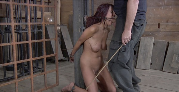 ball-gagged-lavender-is-a-slut